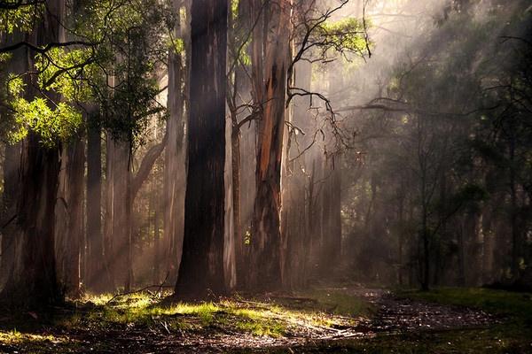 Dandenong Morning by Davesumner