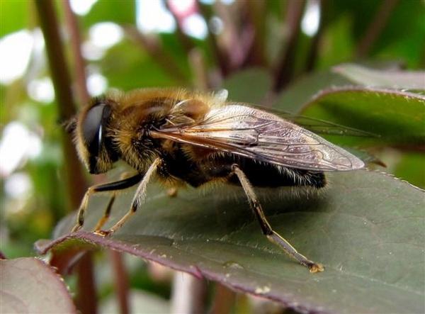 Bee in my bonnet by pixellady