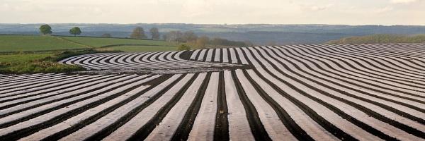 Stripey field by tezmarsden