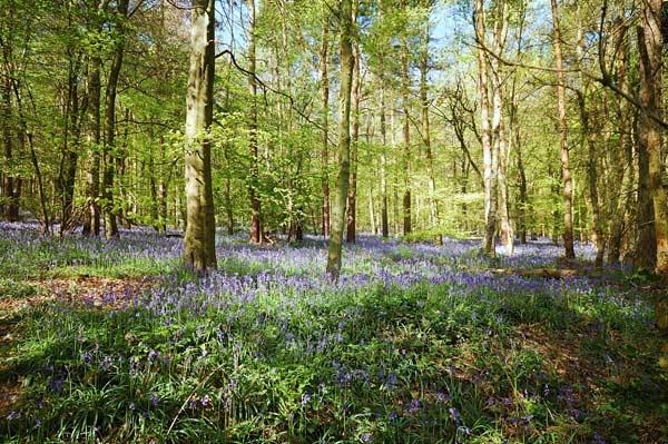 Woodland Glade. by BillM