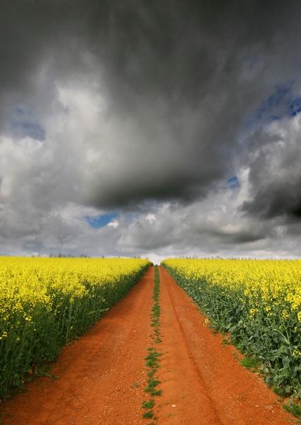 The track by renavatio
