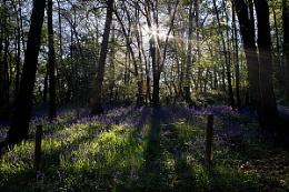 Lesnes Abbey Wood