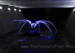 Spider Attack!!