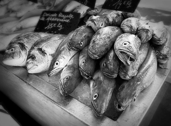 Something Fishy by Coast