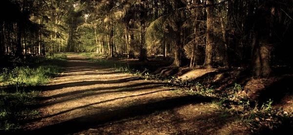 Bluebell Wood Walk by JoshCunliffe