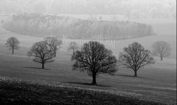 big trees by pjar