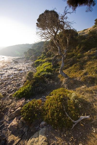 Canal Rocks Coastline by soppygreatdane