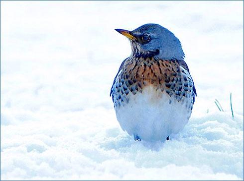 Winter visitor by freespiritscotland