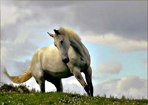 Horse by freespiritscotland