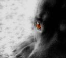 a glint in her eye