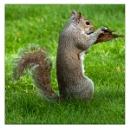 Not, So Secret Squirrel