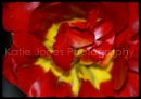 Red and yellow flower.
