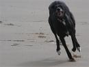 my dog running