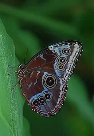 Butterfly by justyn_l