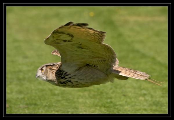 Eagle Owl by GaryR