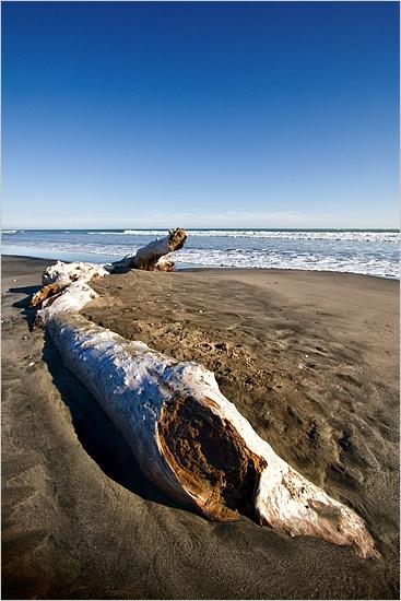 Wanganui Driftwood by kalseru