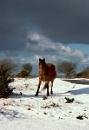 Wild Moor Horse