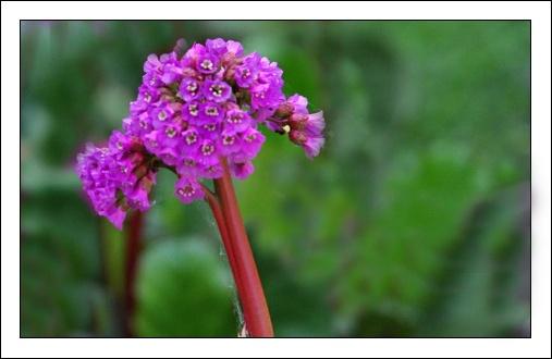 flowers by Adam_photos