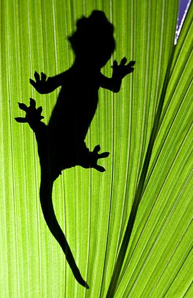 Gecko on Leaf by Les_G