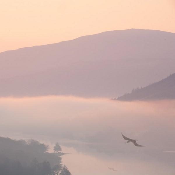 Loch Voil Bird by dsafari