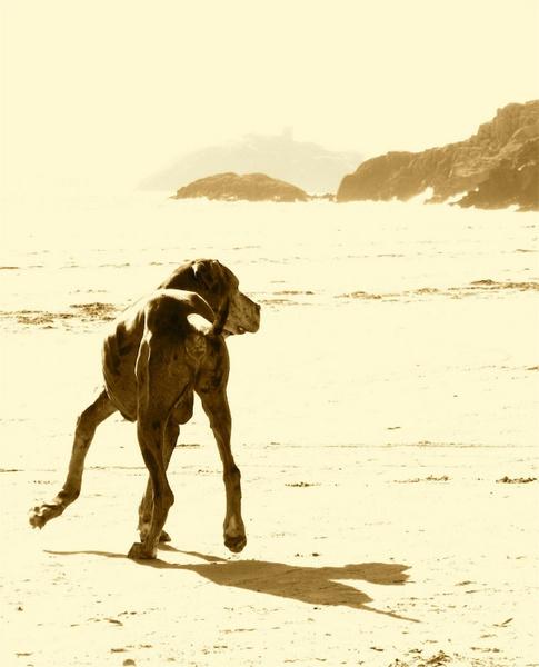 Big Dog by puffant