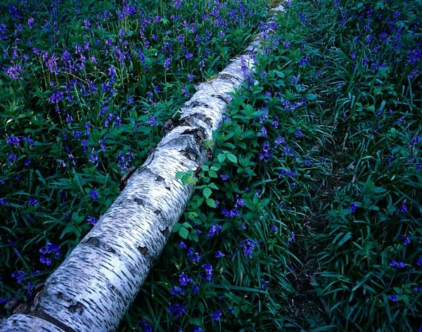 Waresley Wood by fennera