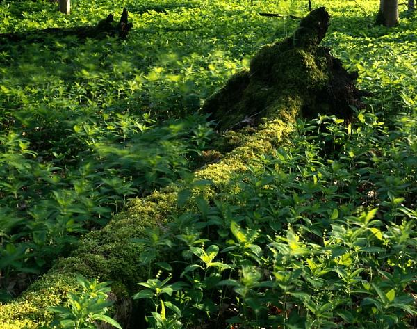 Waresley Wood 2 by fennera