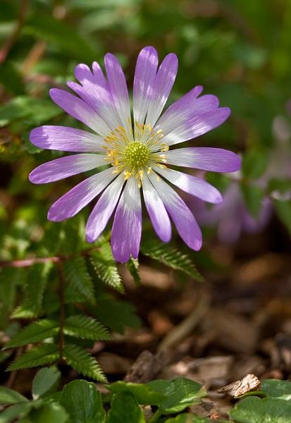 PINK FLOWER by dexthersj41