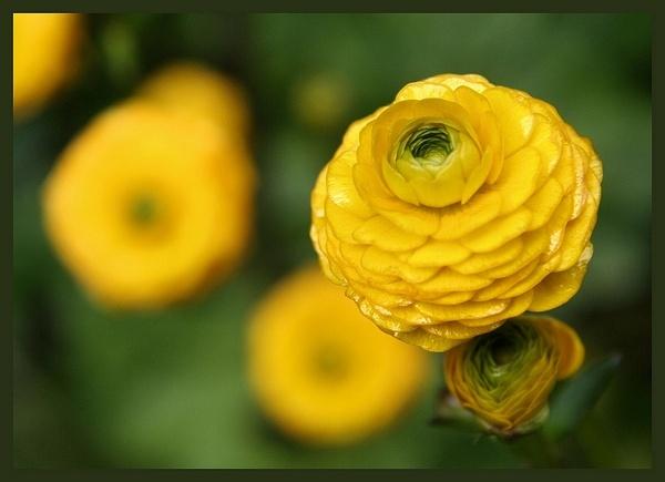 yellow by MacroRebel