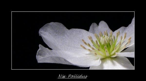 Nix  Pallidus by KEV67S