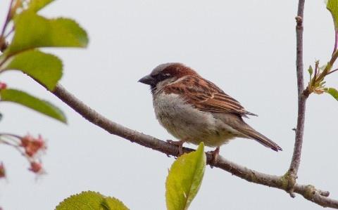 Birdie by mikaela4