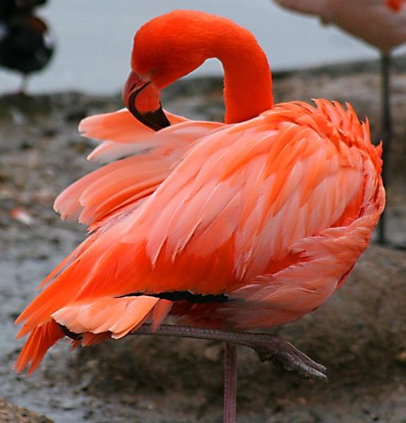 Flamingo by DTsDonuts