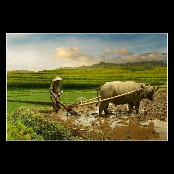 Tanbirin Malayok-Layok (Farming Activity) by rioarchitect