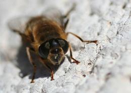 wasp thing