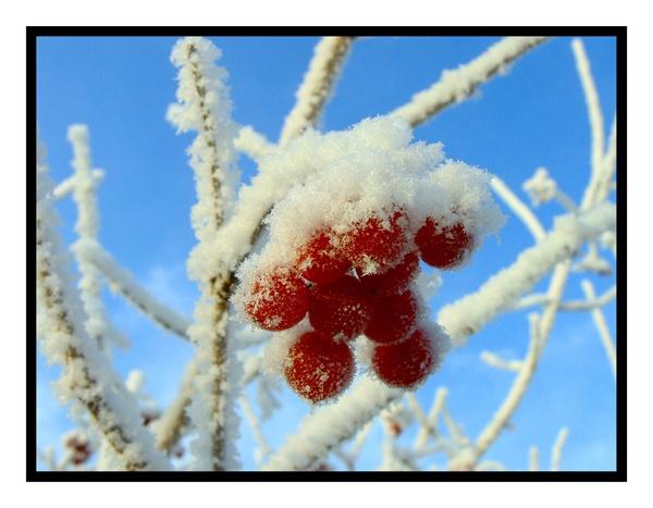 glazzed cherries by smilly