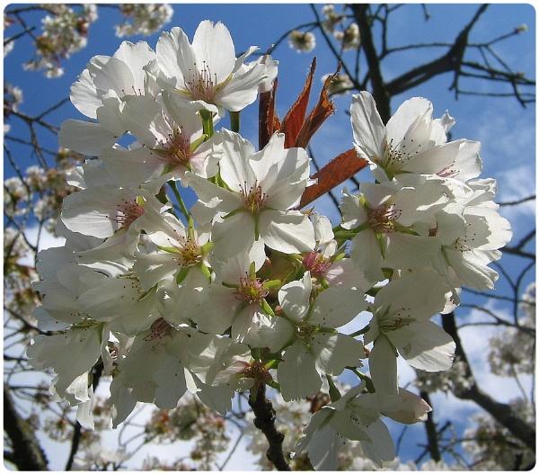 Spring in Bath Botanical Gardens by Glostopcat