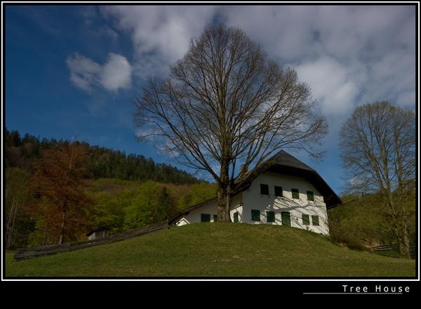 Tree House by 11thearlofmar