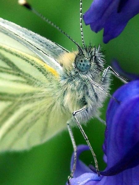 bug eyed by clara_bow