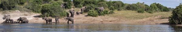 Elephants at the river by netsukekoi