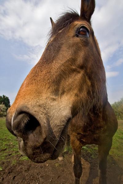 Horse by GrahamBaines