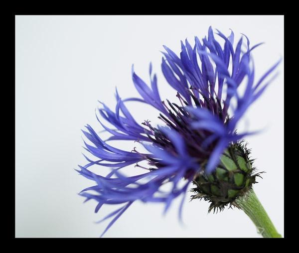 Unknown flower by elaronndy
