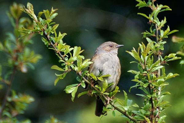 Nightingale. by fishing