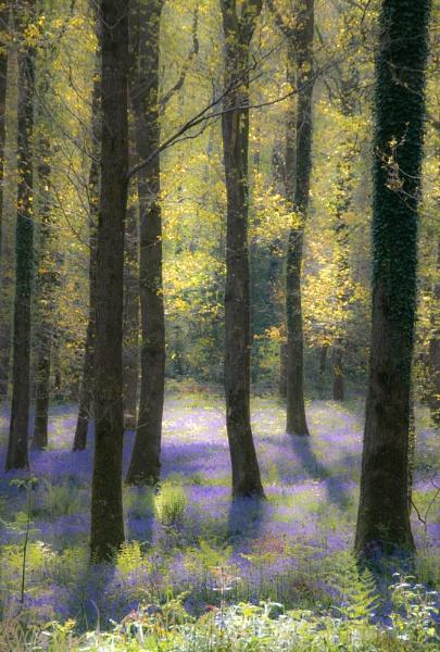 Soft Blue by purplejellyfish500