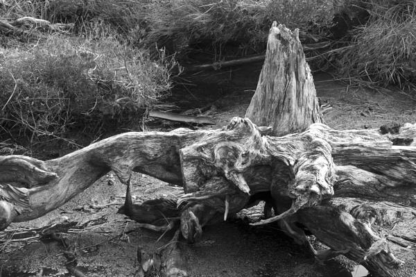 Bog Wood @ Rannoch Moor by scorpion1946