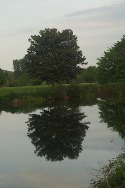 reflections by bigbob2