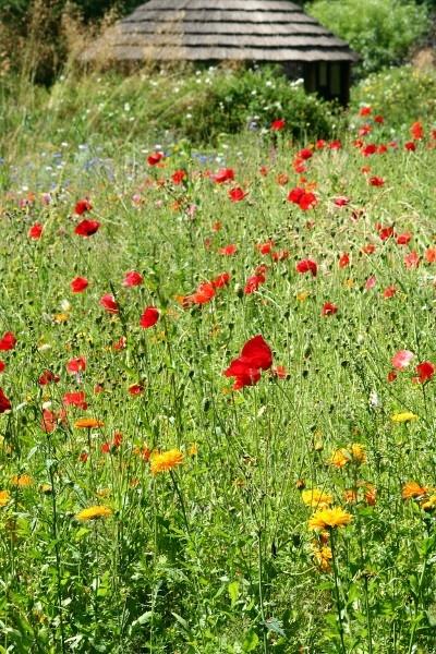 Poppy Field by stevenclark