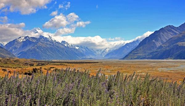 Mt Cook Summer by fourdavisons
