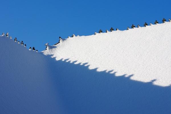 Snowy Rooftop by baclark