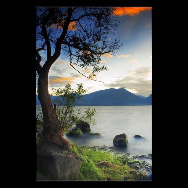 Batang Kayu Singkarak (Lonely Tree) by rioarchitect