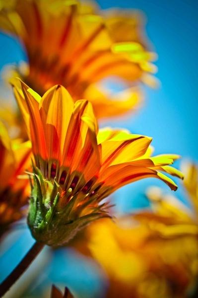 Flower by nturin